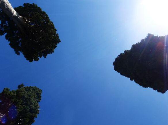 Los tres cipres de Treviño