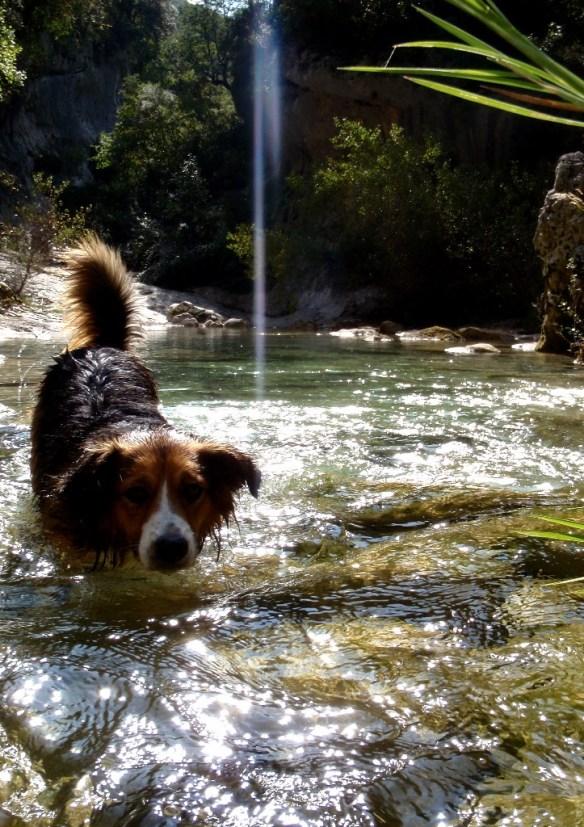 Robert, disfrutando de las aguas del Río Vero