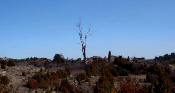 Típico paisaje en Guara; el protagonista de esta foto es el Olmo de la Pardina Latorre