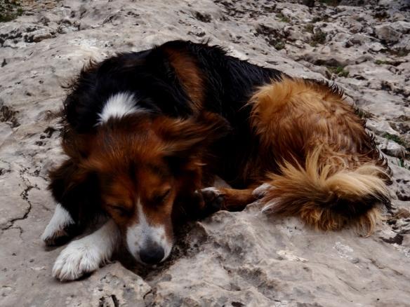 Robert sestea en la orilla rocosa de la Olleta