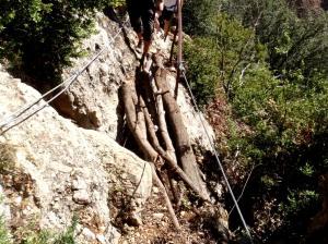 El puente de troncos en el Paso de la Viñeta