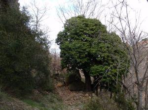 ¿Hiedra o árbol?