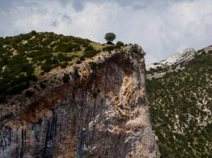 Video: Paseo por Guara II - One tree hill