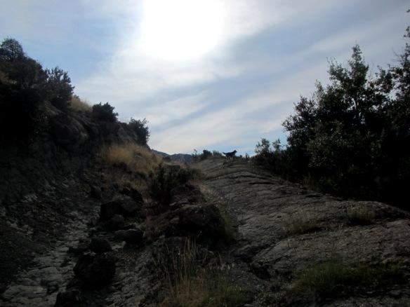 El camino a Ibirque desde Lusera