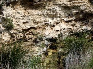 La capa de vegetación petrificada aflora en el barranco de la Tosca
