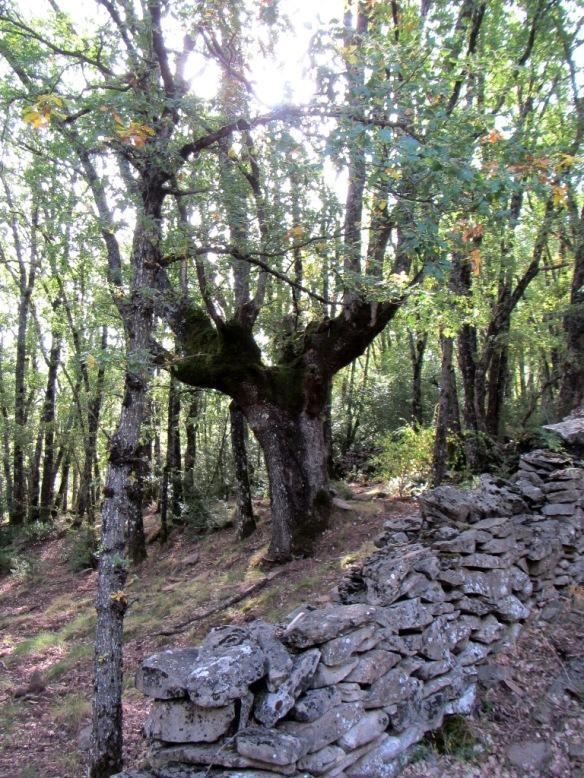 En el bosque cerca de la toma de agua se hallan varios ejemplarios majos.