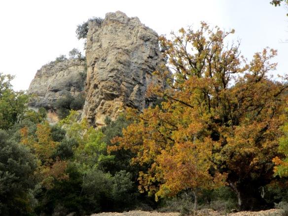 Un viejo quejigo en una pedrera debajo de las Cuevas de Bagüeste
