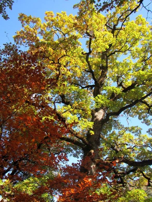Colores de otoños