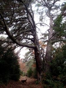 En el sendero que baja de la Sierra de Bonés