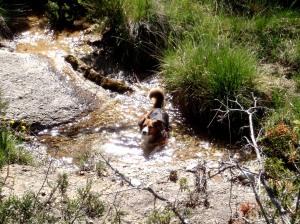 El Barranco de las Palomeras