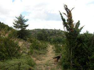 Las Planas de Ibirque