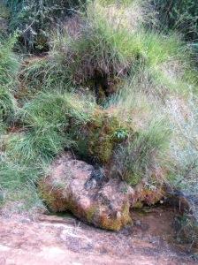 La fuente del Barranco Cuello