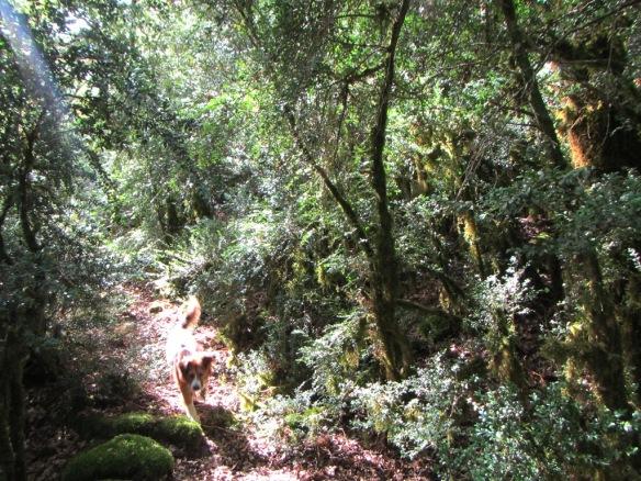 En el camino al Barranco Cajical
