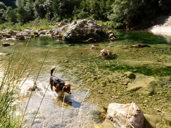 El Río Alcanadre