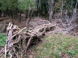 El ambiente en los campos abandonados del Monasterio de San Cosme es tenebroso
