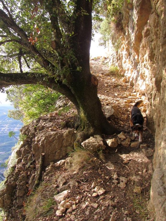 Últimos tramo para llegar a la crestería donde se ubica el Castillo de los Santos.