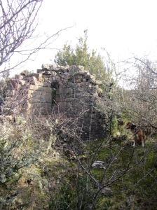 Las ruinas del Templo de Usieto escondido en la maleza