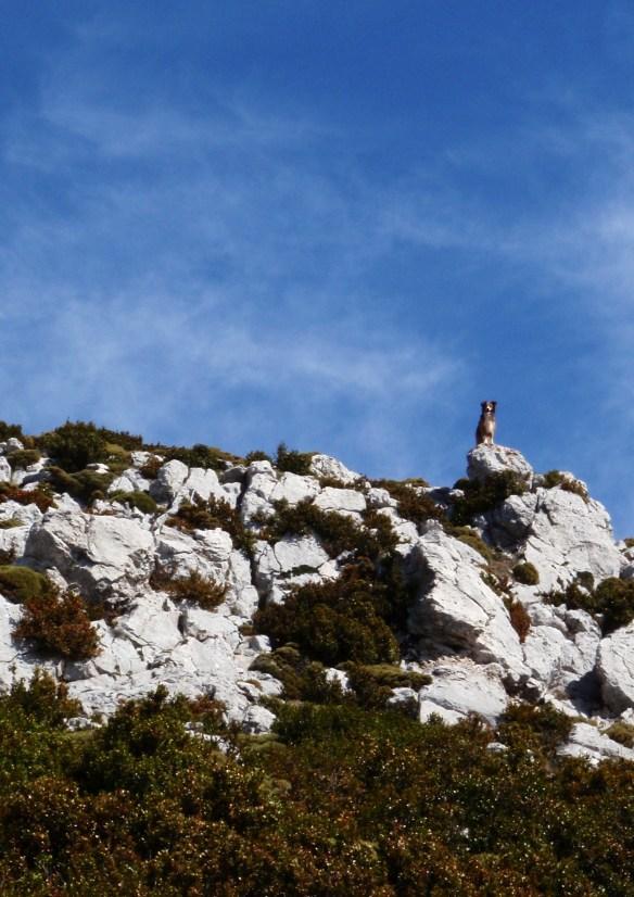 Cerca de la cima del Tozal de Guara
