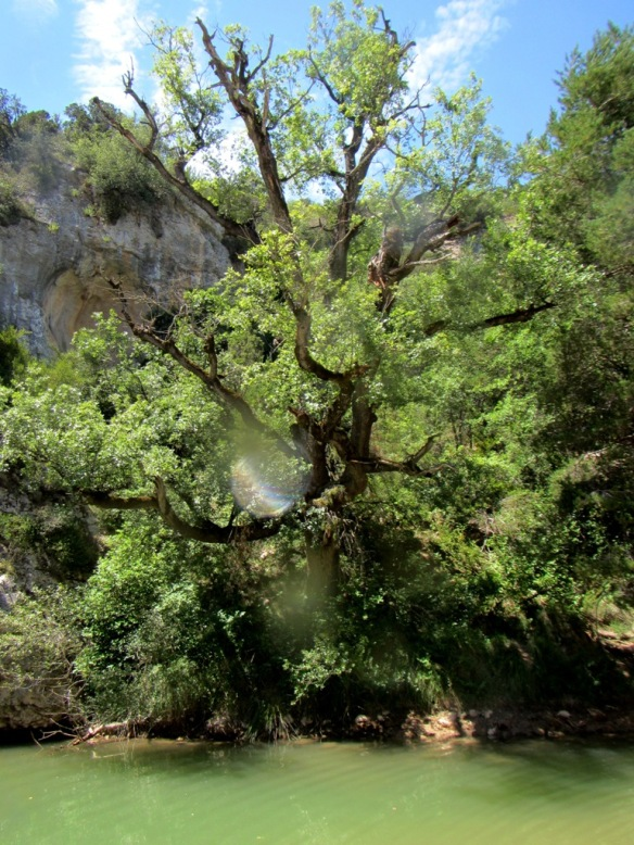 Poza y árbol