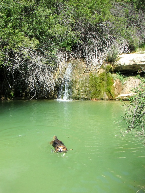Robert bañándose en el joven Guarga