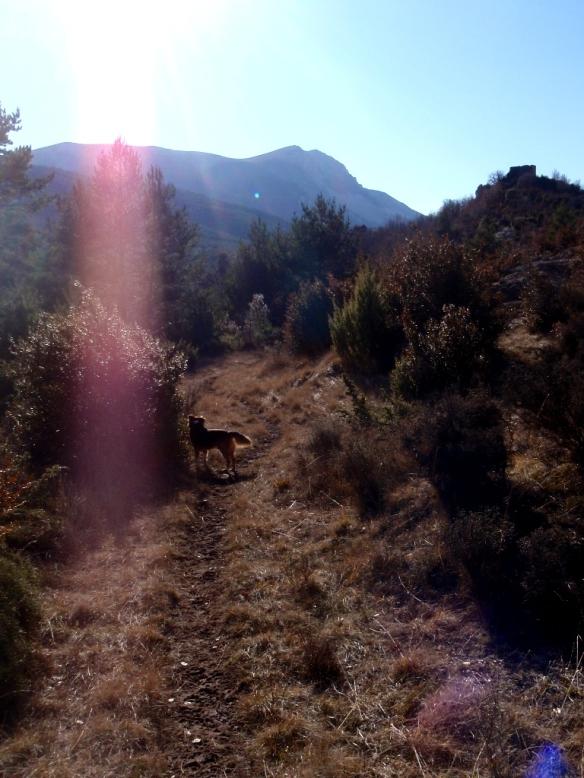 En el camino de Used a Bara