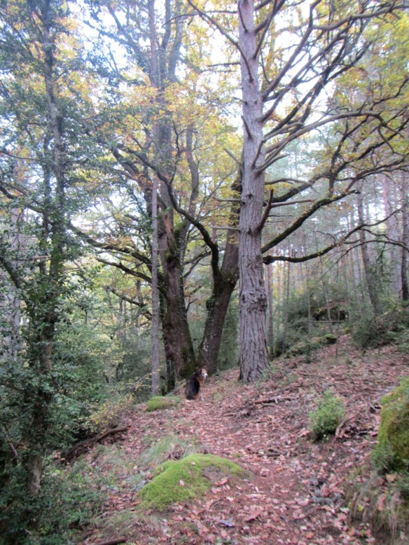 El bosque entre Bara y Miz