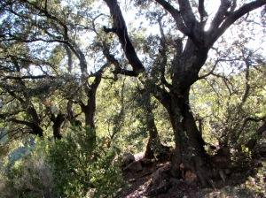 El grupo de Carrascas cerca de la Fuente de los Lavallos