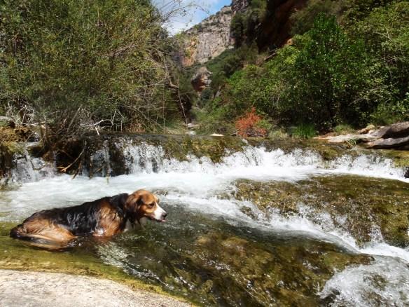 Robert se refresca con las aguas frescas del Flumen